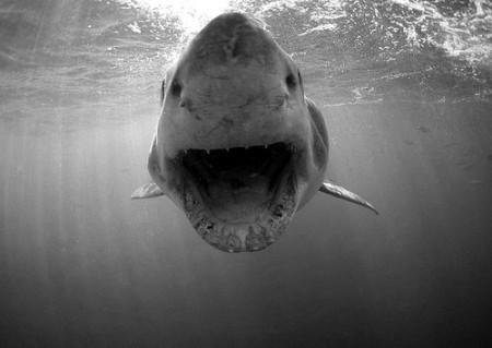 black-and-white-ocean-sea-shark-favim_com-254874